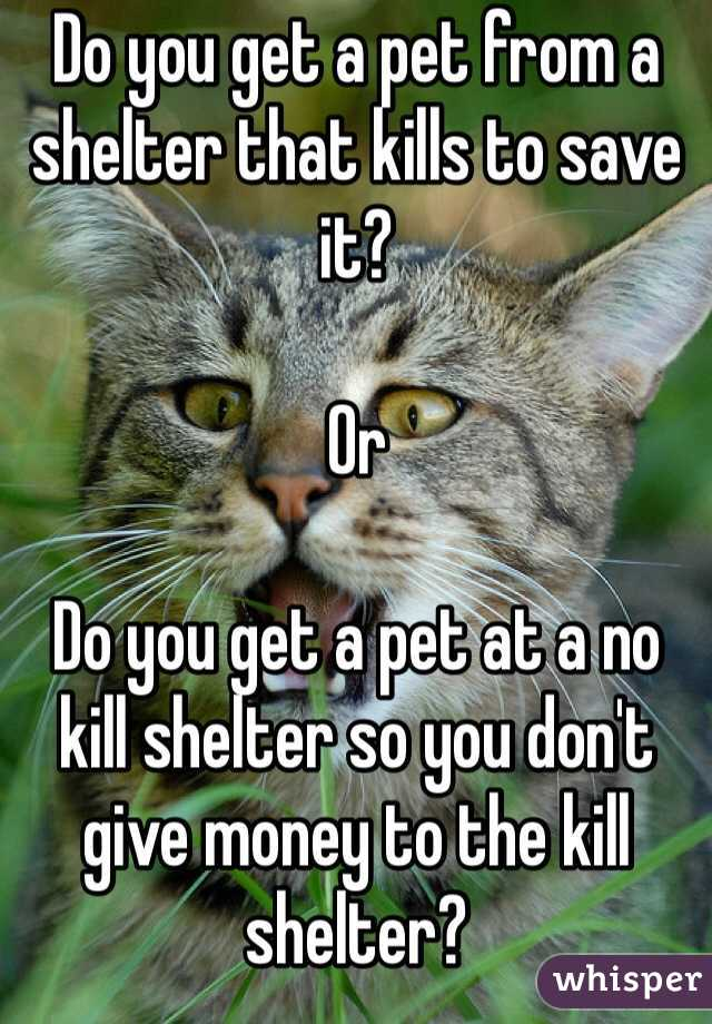 Do you get a pet from a shelter that kills to save it?  Or  Do you get a pet at a no kill shelter so you don't give money to the kill shelter?
