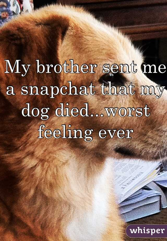 My brother sent me a snapchat that my dog died...worst feeling ever