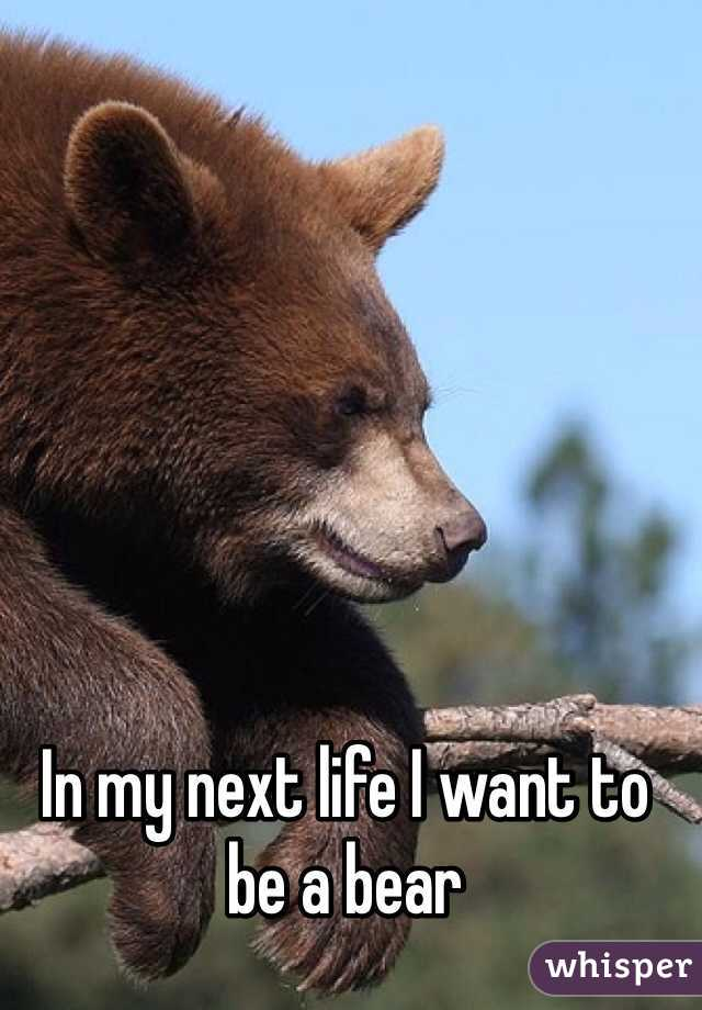In my next life I want to be a bear
