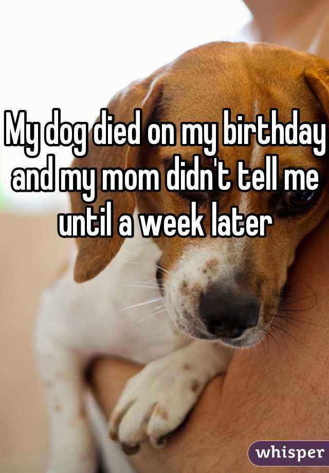 My dog died on my birthday and my mom didn't tell me until a week later