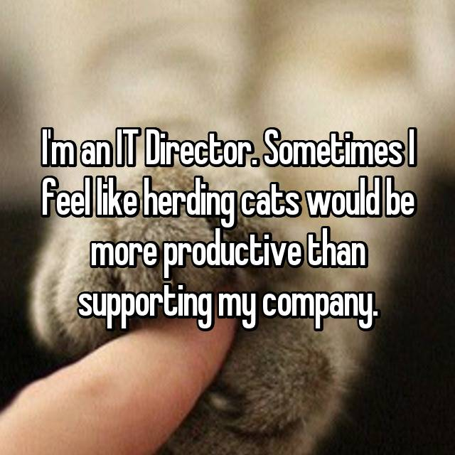 I'm an IT Director. Sometimes I feel like herding cats would be more productive than supporting my company.