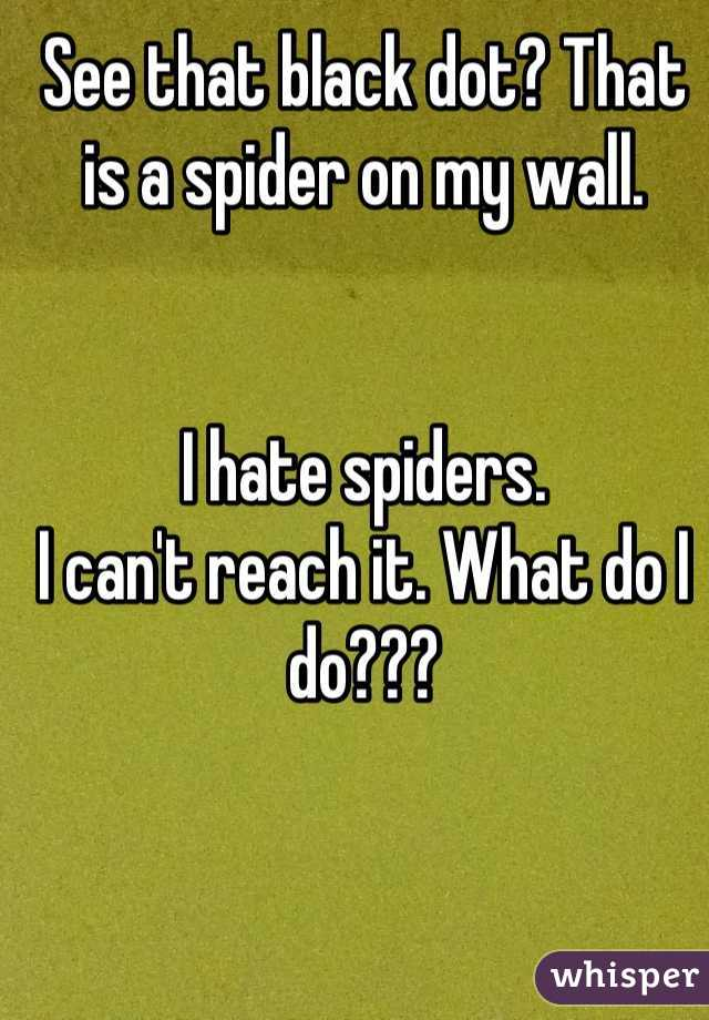 See that black dot? That is a spider on my wall.   I hate spiders. I can't reach it. What do I do???