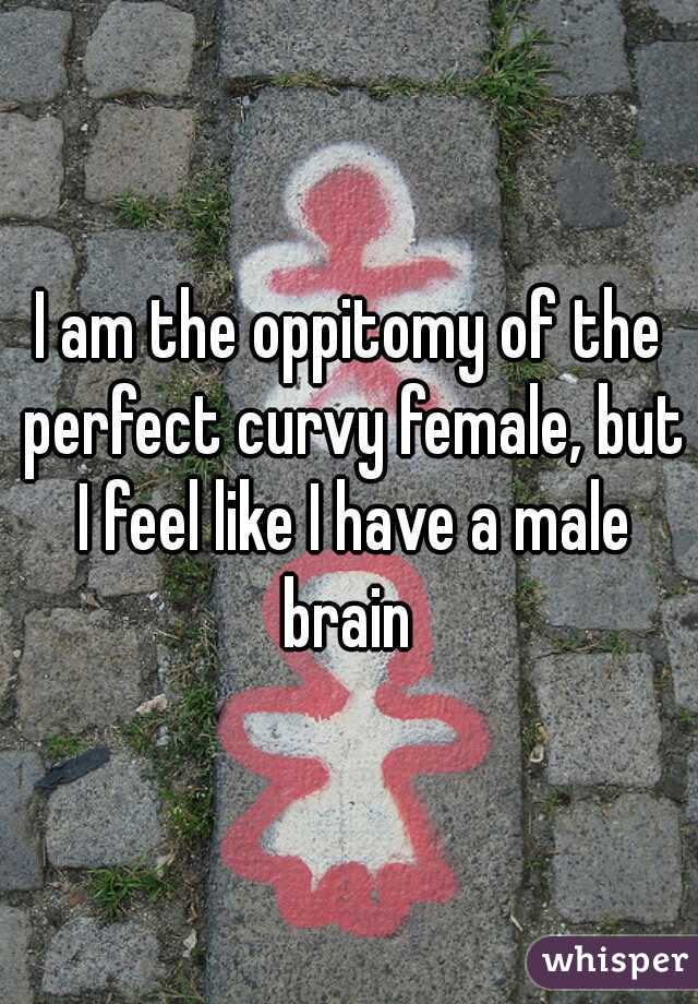 I am the oppitomy of the perfect curvy female, but I feel like I have a male brain