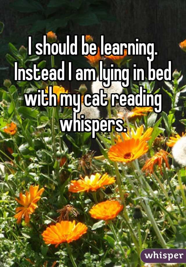 I should be learning.  Instead I am lying in bed with my cat reading whispers.