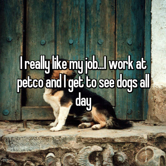 I really like my job...I work at petco and I get to see dogs all day