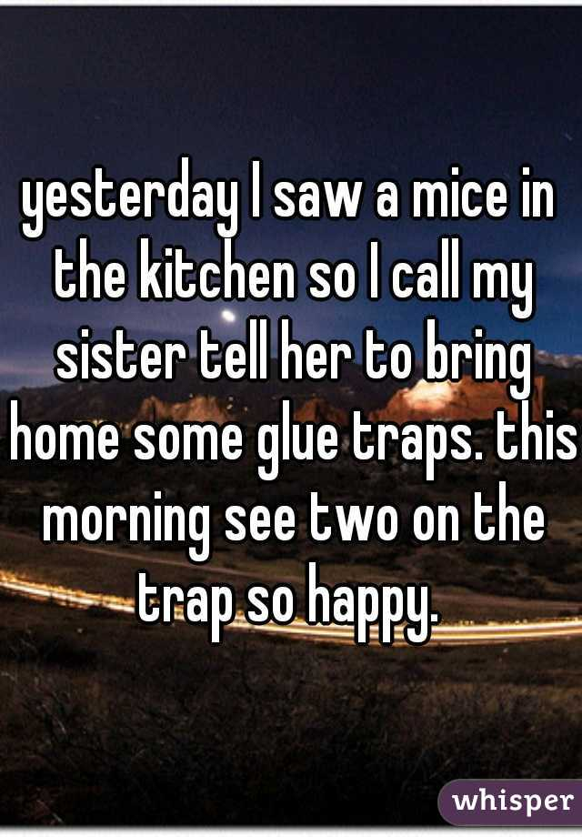yesterday I saw a mice in the kitchen so I call my sister tell her to bring home some glue traps. this morning see two on the trap so happy.