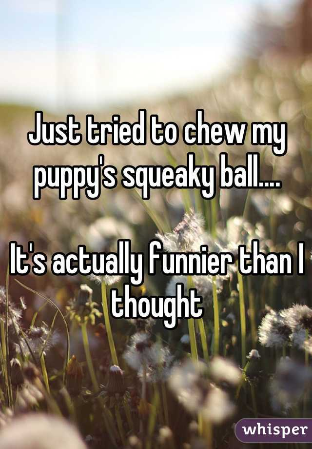 Just tried to chew my puppy's squeaky ball....   It's actually funnier than I thought