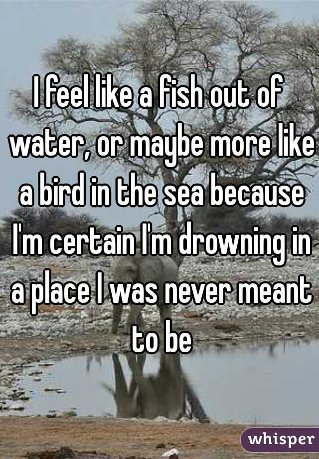 I feel like a fish out of water, or maybe more like a bird in the sea because I'm certain I'm drowning in a place I was never meant to be
