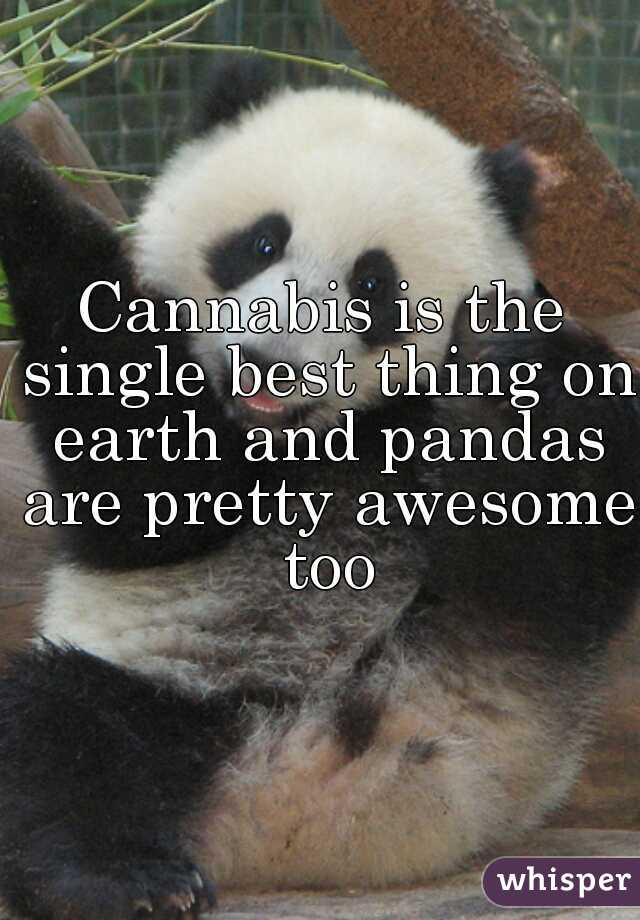 Cannabis is the single best thing on earth and pandas are pretty awesome too