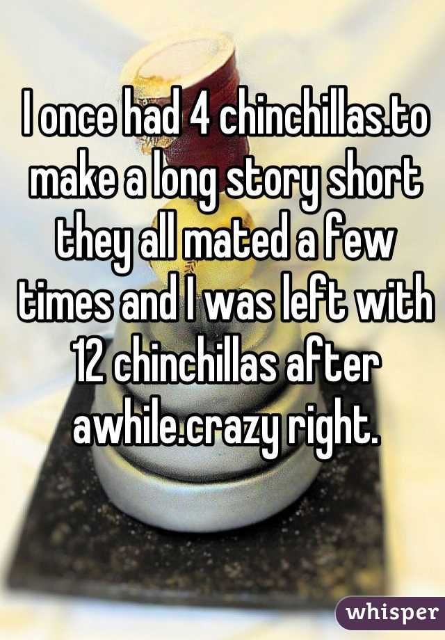 I once had 4 chinchillas.to make a long story short they all mated a few times and I was left with 12 chinchillas after awhile.crazy right.