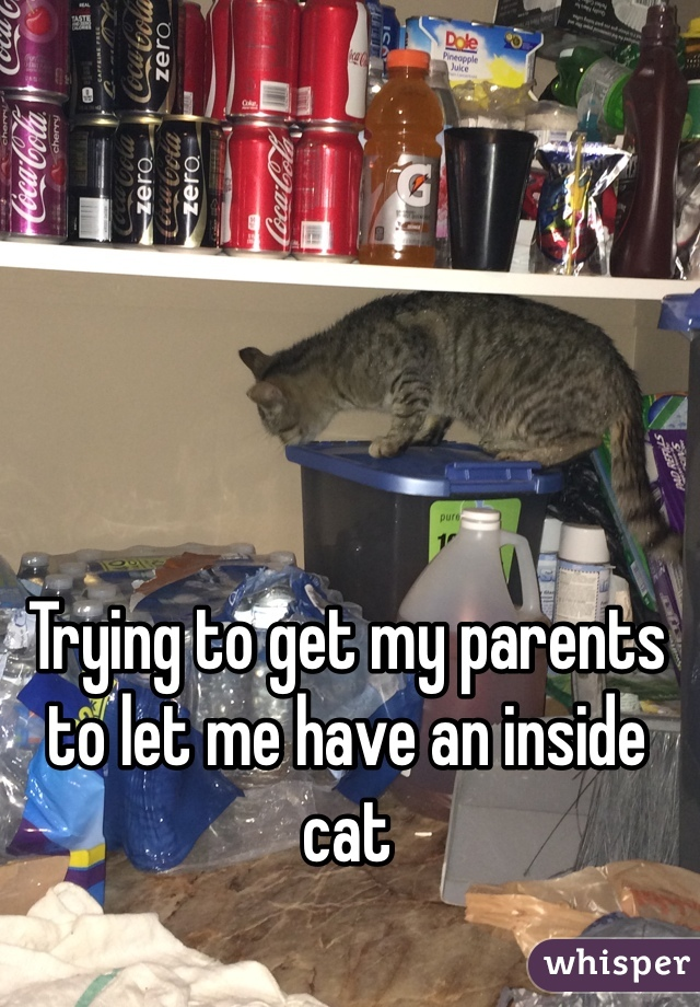 Trying to get my parents to let me have an inside cat