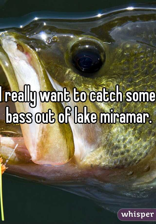 I really want to catch some bass out of lake miramar.
