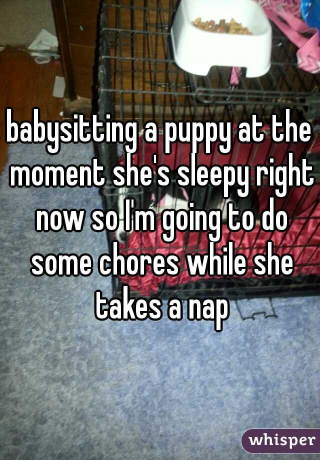 babysitting a puppy at the moment she's sleepy right now so I'm going to do some chores while she takes a nap