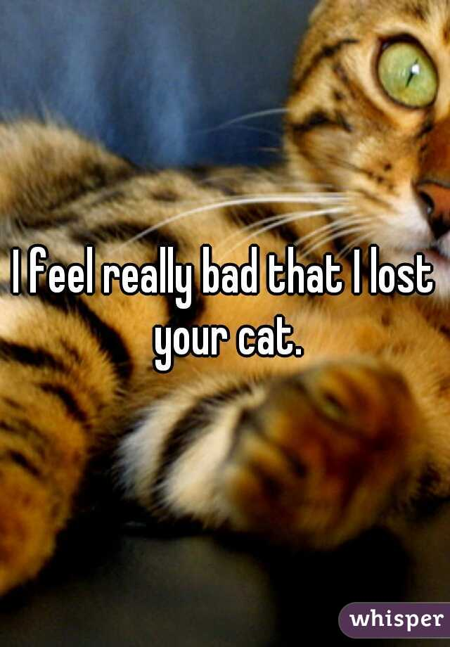 I feel really bad that I lost your cat.