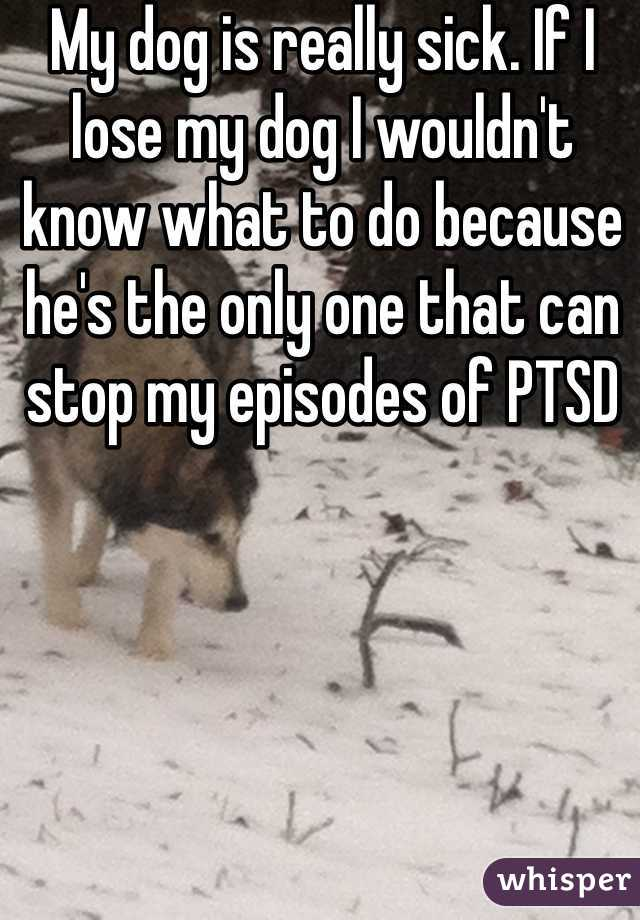 My dog is really sick. If I lose my dog I wouldn't know what to do because he's the only one that can stop my episodes of PTSD