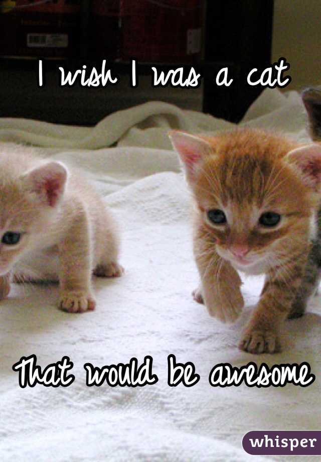 I wish I was a cat     That would be awesome