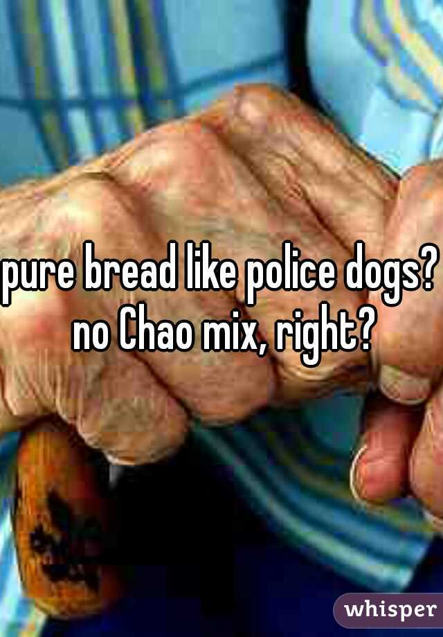 pure bread like police dogs? no Chao mix, right?
