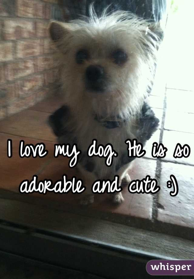 I love my dog. He is so adorable and cute :)