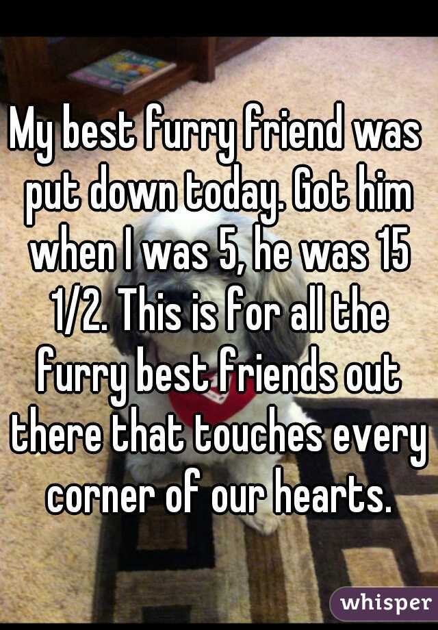 My best furry friend was put down today. Got him when I was 5, he was 15 1/2. This is for all the furry best friends out there that touches every corner of our hearts.