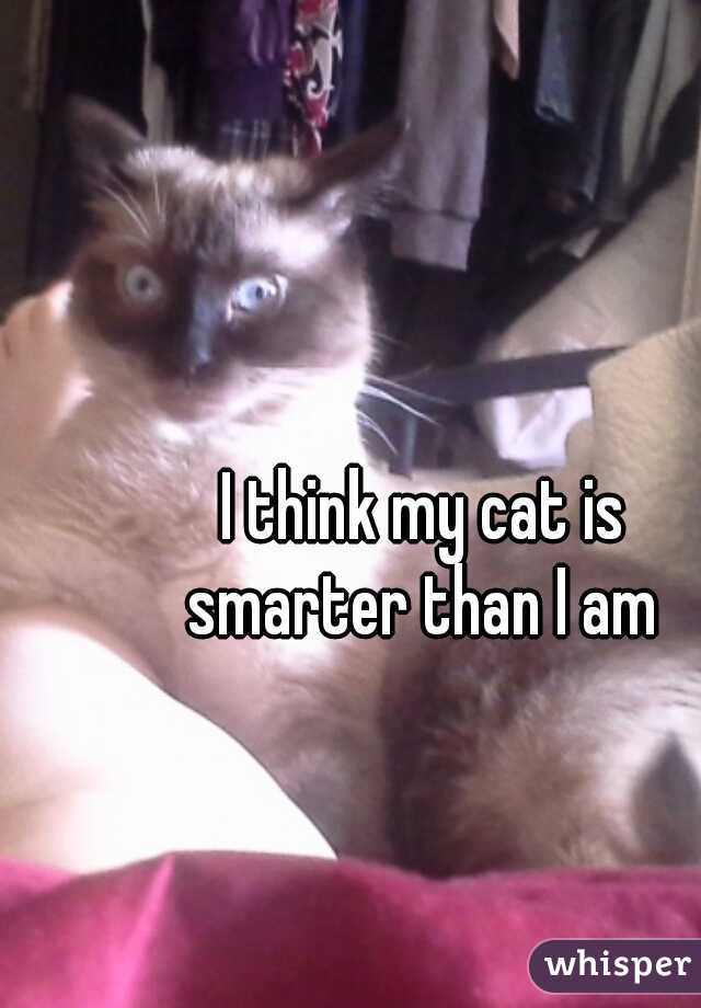 I think my cat is  smarter than I am