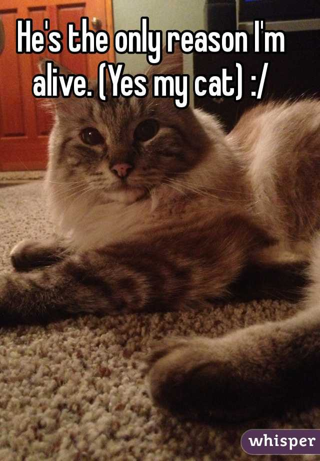 He's the only reason I'm alive. (Yes my cat) :/