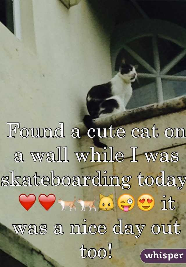 Found a cute cat on a wall while I was skateboarding today. ❤️❤️🐈🐈🐱😜😍 it was a nice day out too!