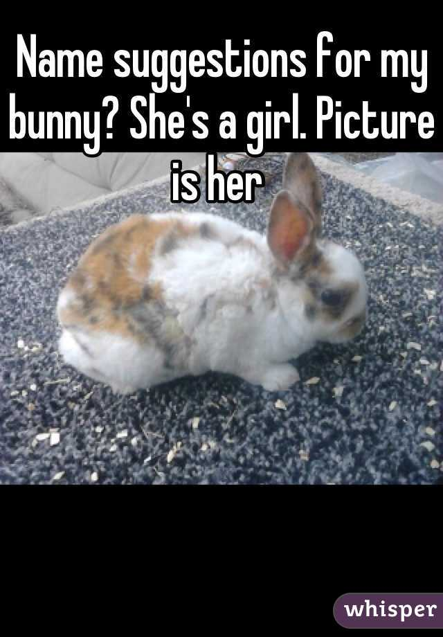 Name suggestions for my bunny? She's a girl. Picture is her