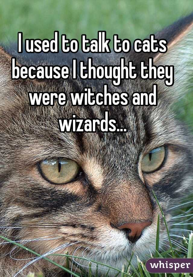 I used to talk to cats because I thought they were witches and wizards...