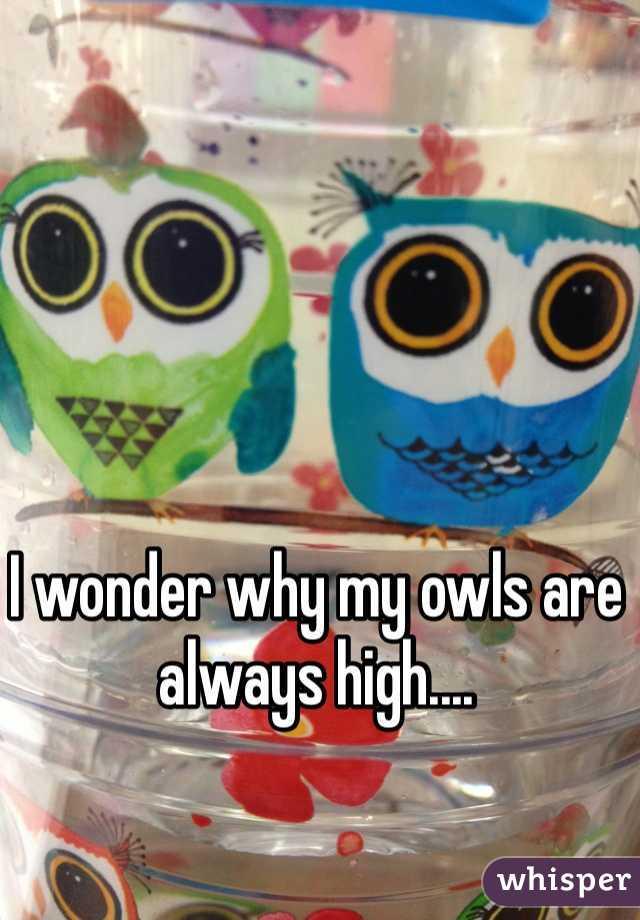 I wonder why my owls are always high....
