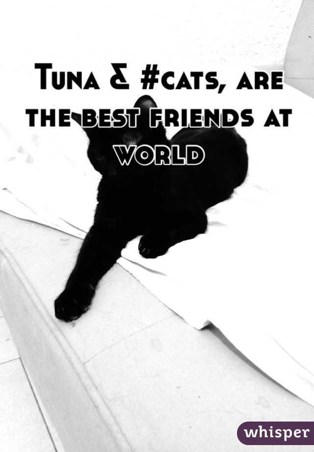 Tuna & #cats, are the best friends at world