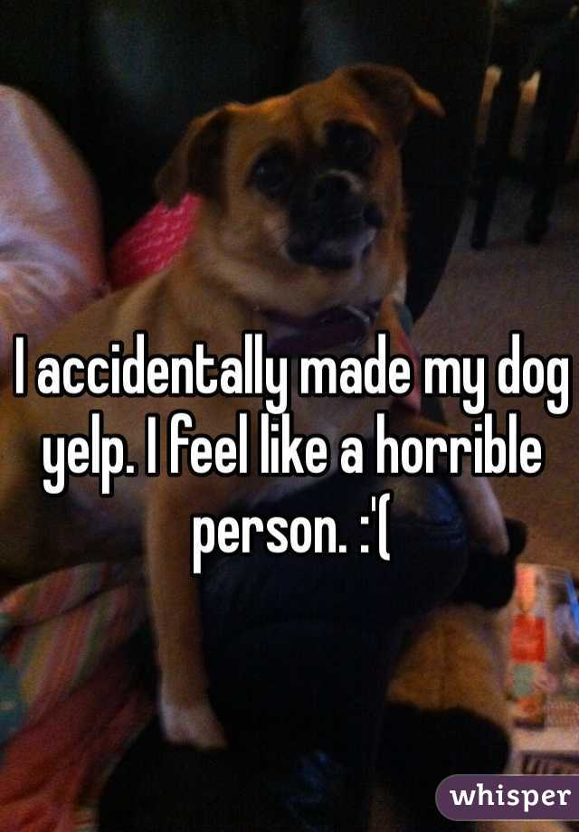 I accidentally made my dog yelp. I feel like a horrible person. :'(