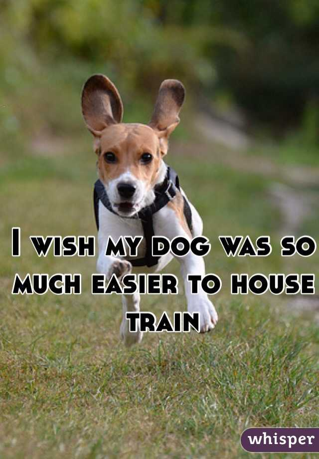 I wish my dog was so much easier to house train