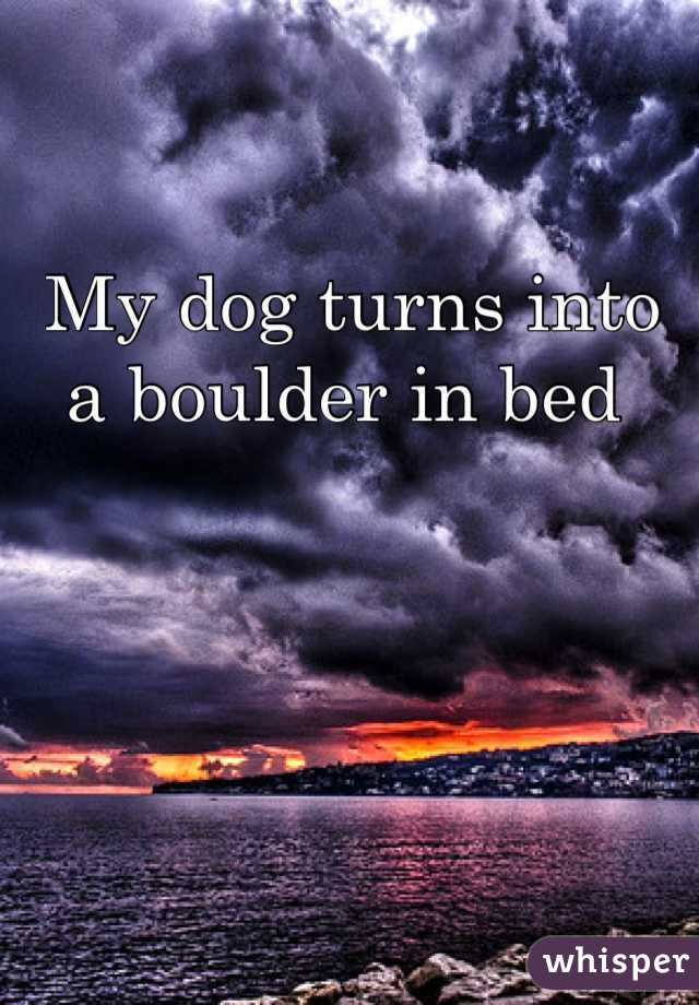 My dog turns into a boulder in bed