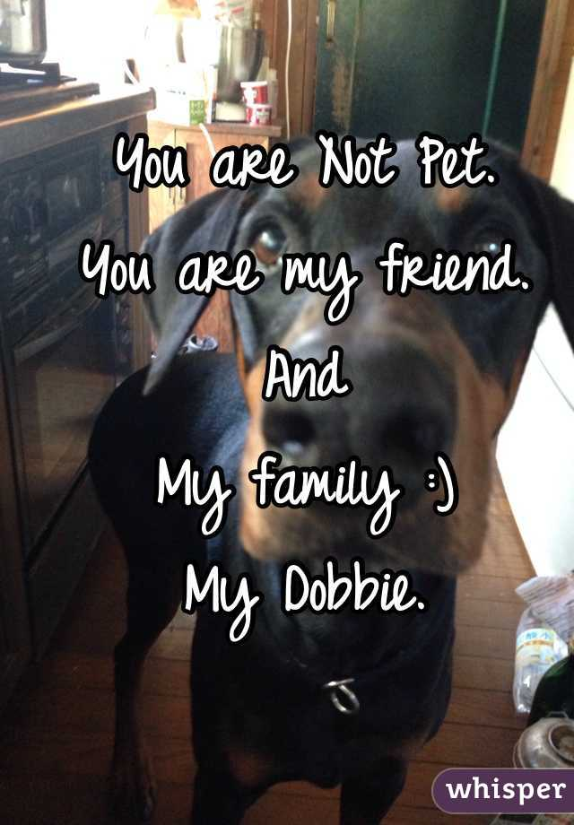 You are Not Pet. You are my friend. And My family :) My Dobbie.