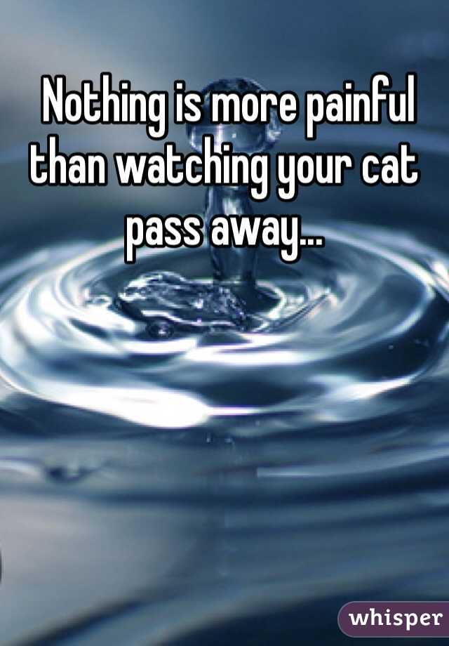 Nothing is more painful than watching your cat pass away...