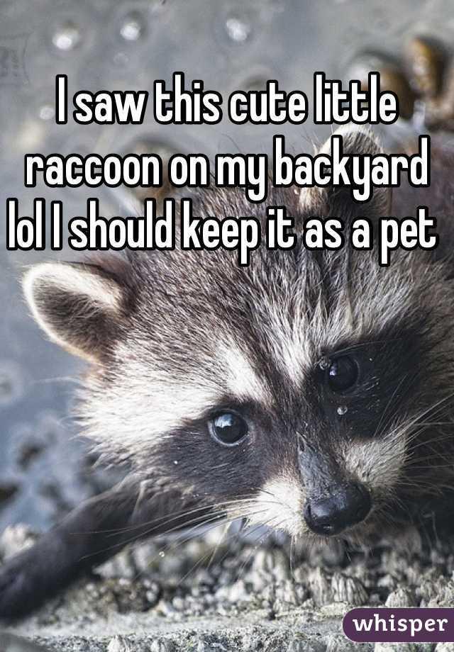 I saw this cute little raccoon on my backyard  lol I should keep it as a pet