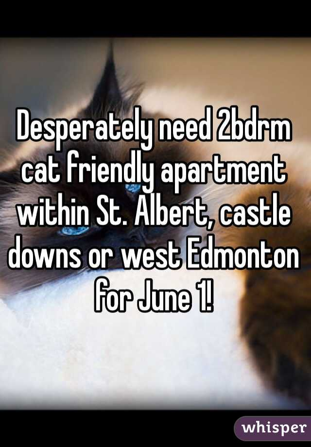 Desperately need 2bdrm cat friendly apartment within St. Albert, castle downs or west Edmonton for June 1!