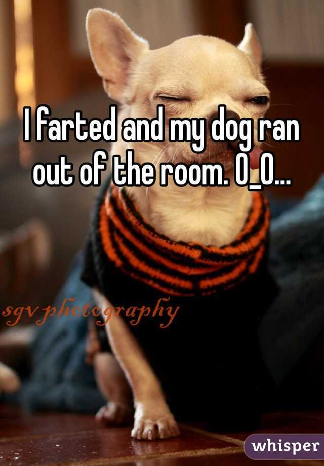 I farted and my dog ran out of the room. O_O...