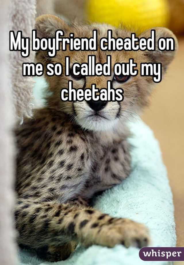 My boyfriend cheated on me so I called out my cheetahs