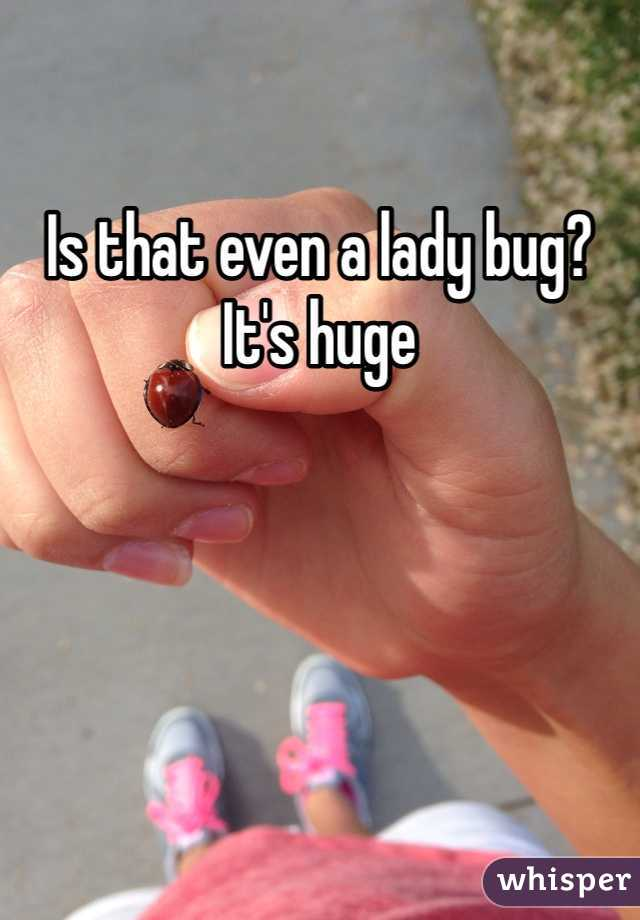 Is that even a lady bug? It's huge
