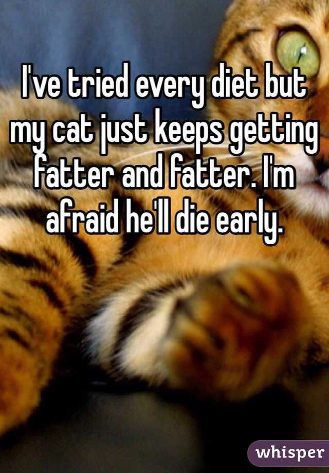 I've tried every diet but my cat just keeps getting fatter and fatter. I'm afraid he'll die early.