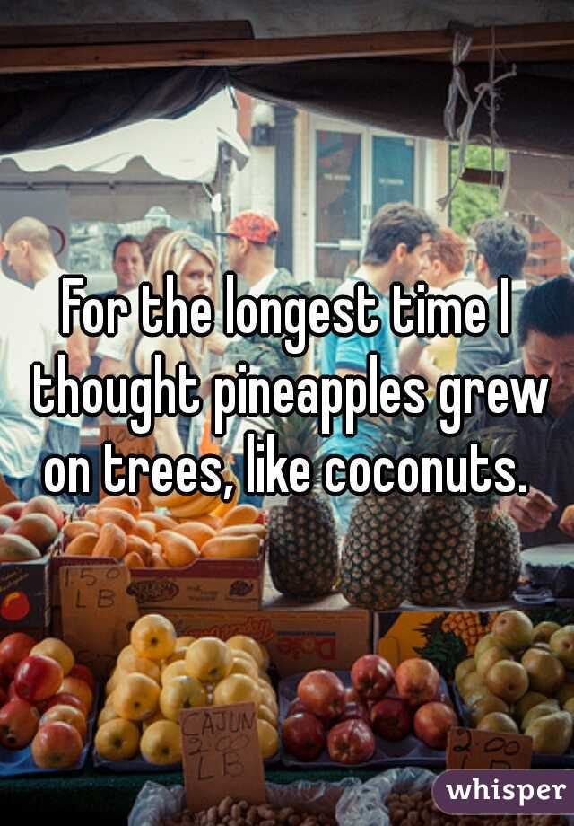 For the longest time I thought pineapples grew on trees, like coconuts.