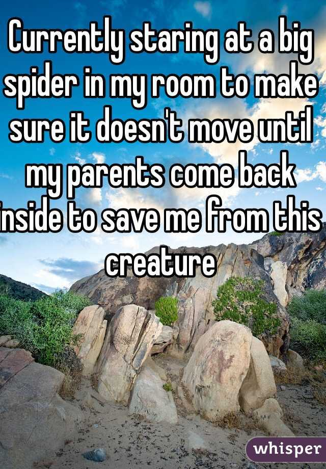 Currently staring at a big spider in my room to make sure it doesn't move until my parents come back inside to save me from this creature