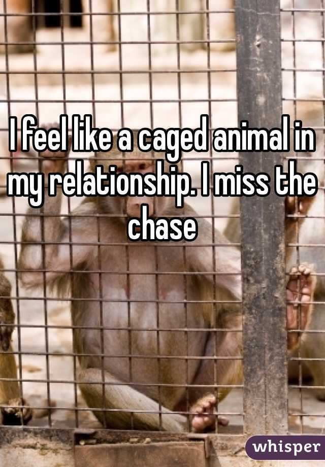 I feel like a caged animal in my relationship. I miss the chase