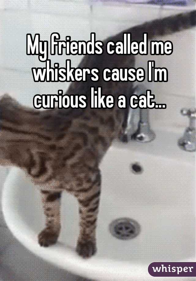 My friends called me whiskers cause I'm curious like a cat...