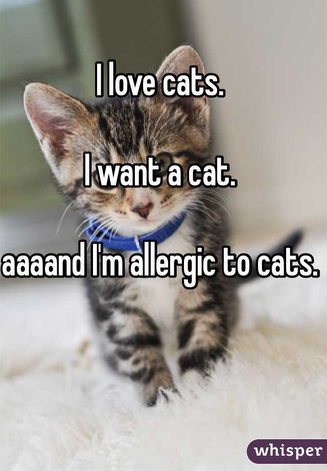 I love cats.   I want a cat.  aaaand I'm allergic to cats.