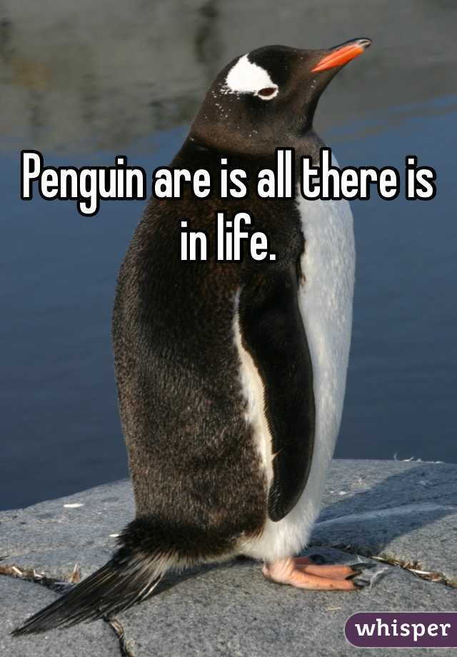 Penguin are is all there is in life.