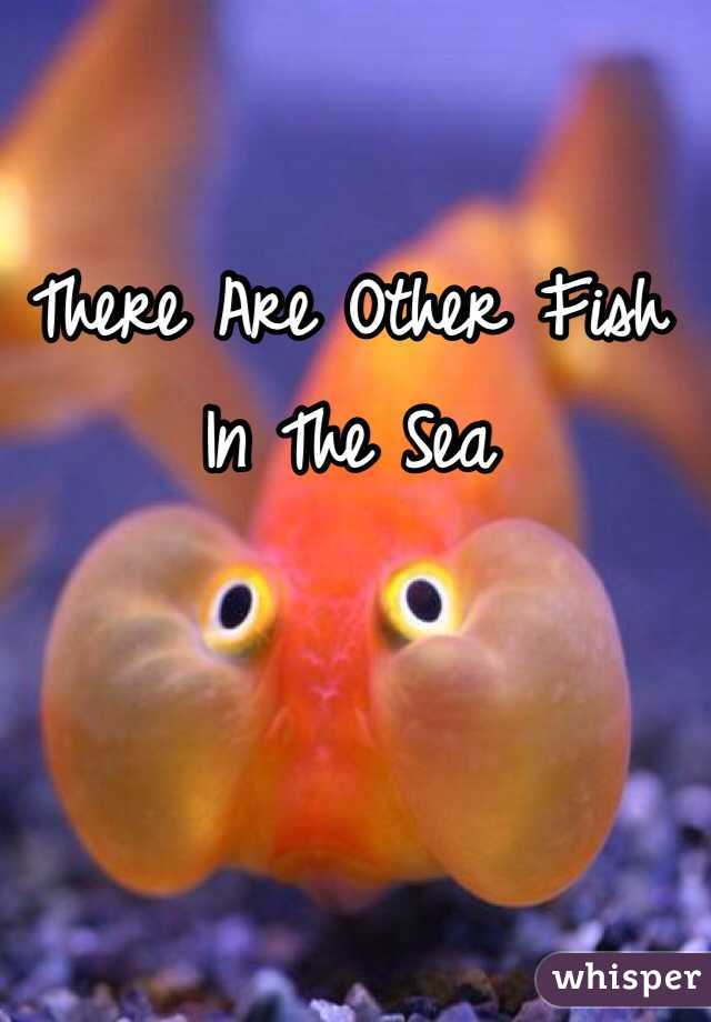 There Are Other Fish In The Sea