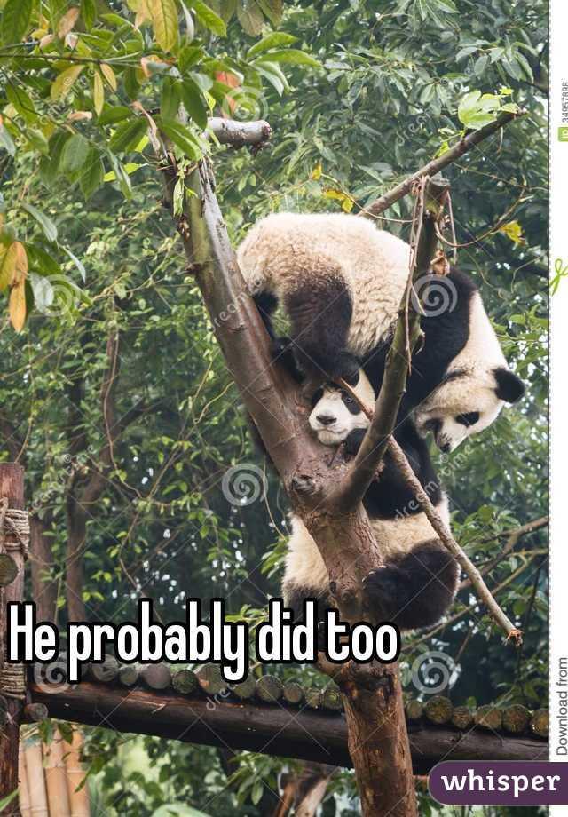 giant panda essay