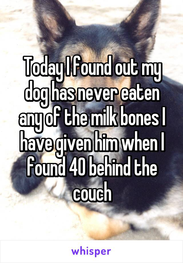 Today I found out my dog has never eaten any of the milk bones I have given him when I found 40 behind the couch